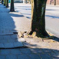 木の根と歩道の損傷
